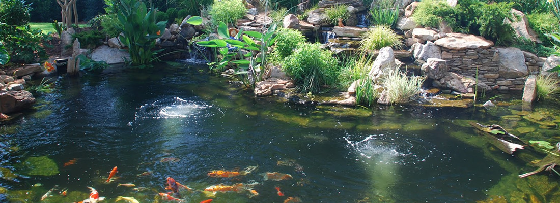 ponds phoenix ponds cleaning On pond expert
